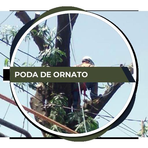 servicio_poda_ornato